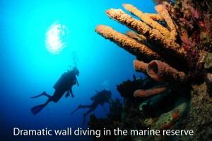 Scuba diving in Dominica's marine reserve