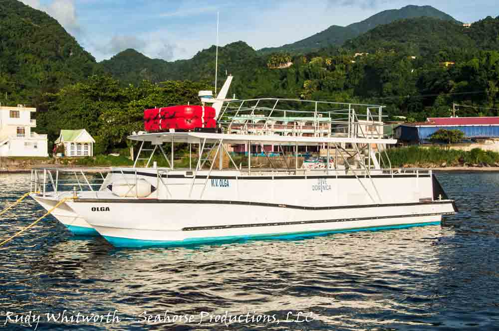 Charter and dive boat Olga