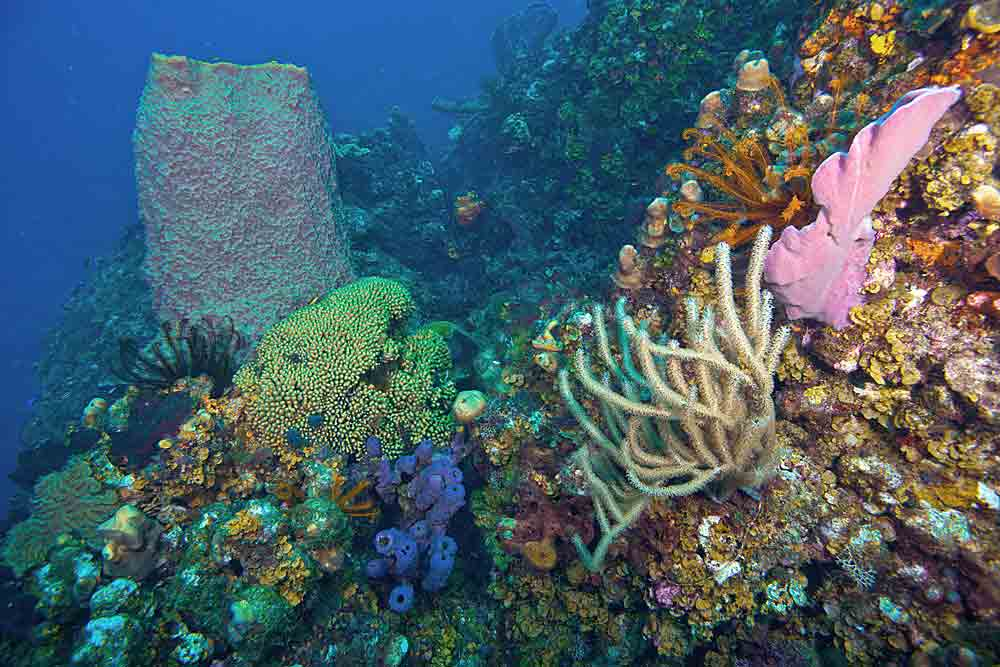 corals, sponges and crinoids