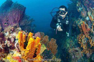 vivid-reef
