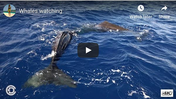 whale watching video